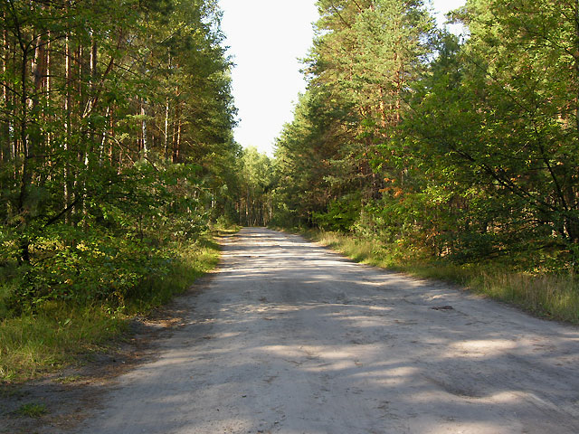 przejście przez drogę prowadzącą do Borowych Młynów