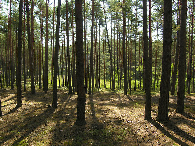 przejżysty las po powrotnym wejściu do lasu