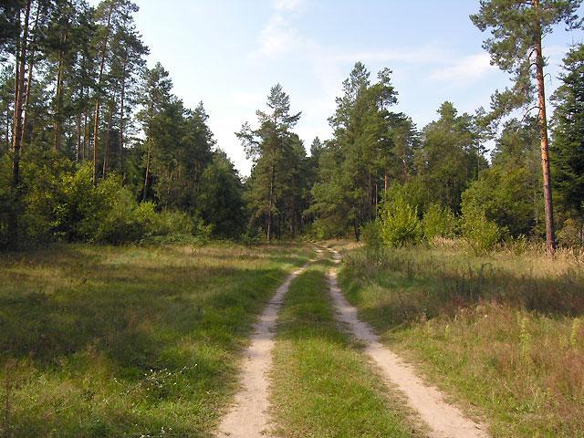 charakterystyczne leśne drogi Roztocza