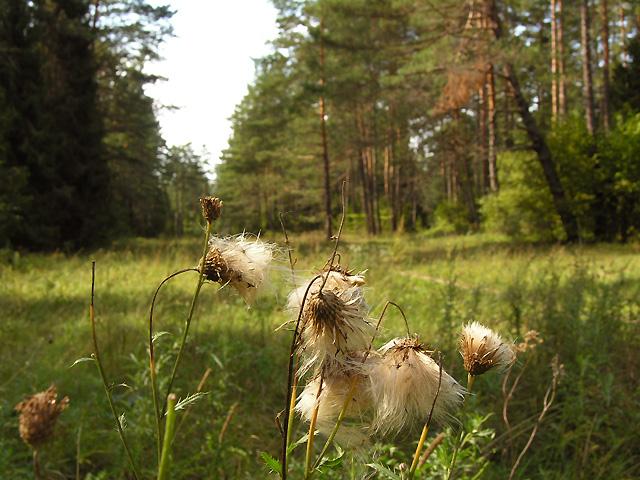 śródleśne polany