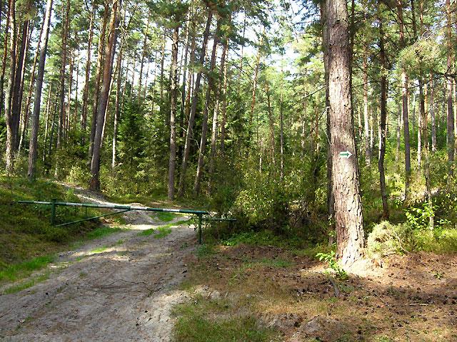 w lesie w lewo aż do szlabanu nadleśnictwa, za nim w prawo