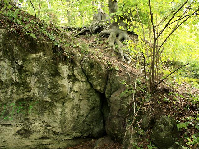 pozostałości po miejscu wydobywania wapieni