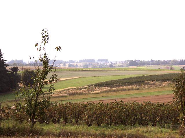widok w kierunku na Łuszczacz