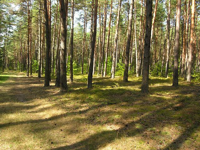 w lesie na wschód