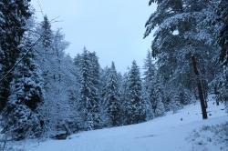 W poszukiwaniu Królowej Śniegu - Susiec 25.12.2016 r.